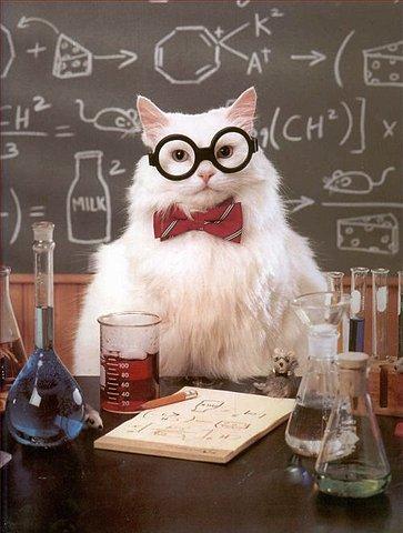 Professor Cat-1